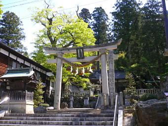 鉛練比古神社のケヤキ