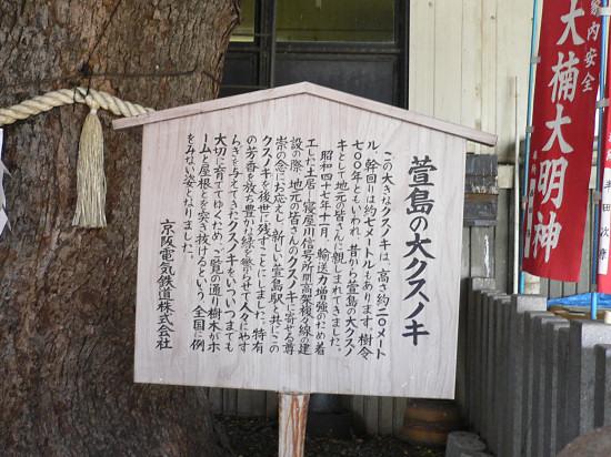 http://www.tree-flower.jp/27/kayashima_kusu_440/kayashima_kusu_03.jpg