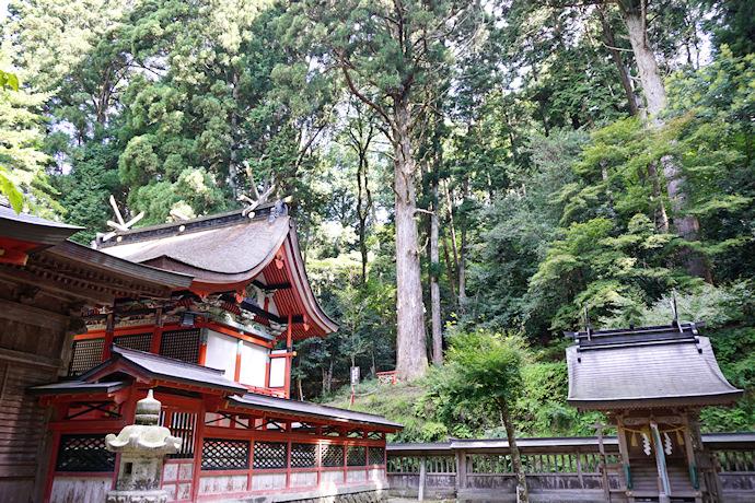 御形神社の夜の間杉
