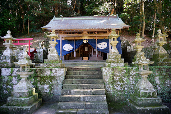 和深川王子神社のムクノキ